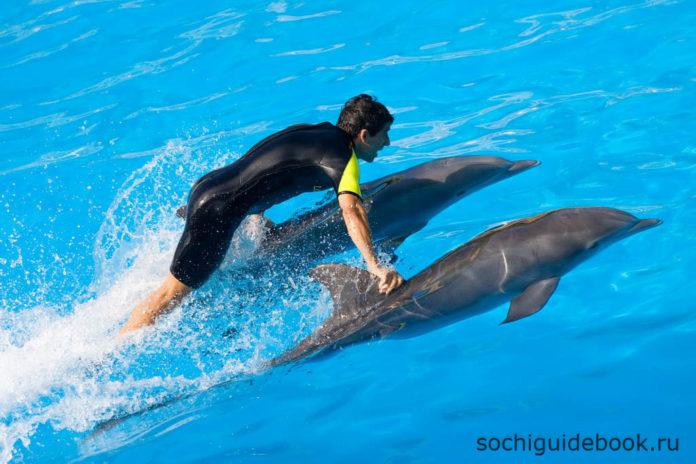 Сочи. Дельфинарий. Шоу с дельфинами.