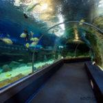 Океанариум Discovery World. Адлер. Аквариум тоннельного типа.