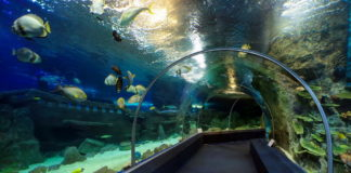 Океанариум Discovery World. Адлер.