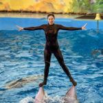 """""""Ривьера"""" парк. Дельфинарий. Шоу с дельфинами."""